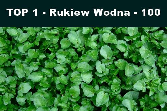 rukiew
